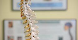 6 Things You Didn't Know About Your Spine