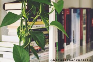house plants, clean air, home office, health, natural, air, happiness.